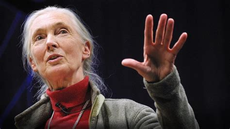 What separates us from chimpanzees?   Jane Goodall - YouTube